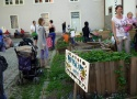 "Visiting the urban gardening project ""gottesacker"" at the church St. Andrä, Graz"